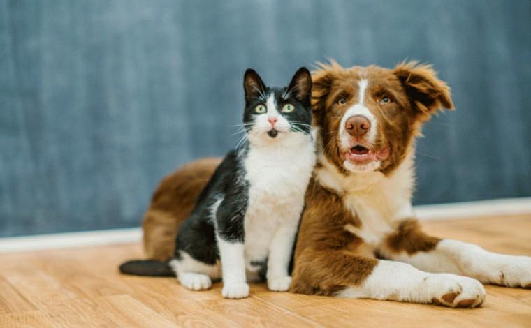 Mutirão de castração gratuita de cães e gatos será realizado durante o mês de julho em Sete Lagoas