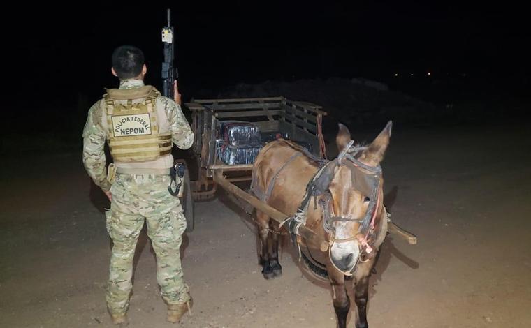Burro é apreendido transportando cerca de 300 Kg de maconha em uma carroça no Paraná