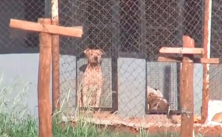Mulher morre ao ser atacada por seis pitbulls em chácara no interior paulista