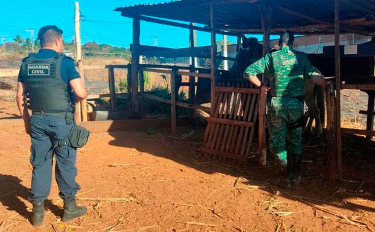 Cavalo vítima de maus-tratos é resgatado pela GCM de Sete Lagoas e proprietária é autuada