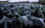 Onda de frio ameaça agricultura e pode impactar ainda mais nos preços de café, frutas e hortaliças