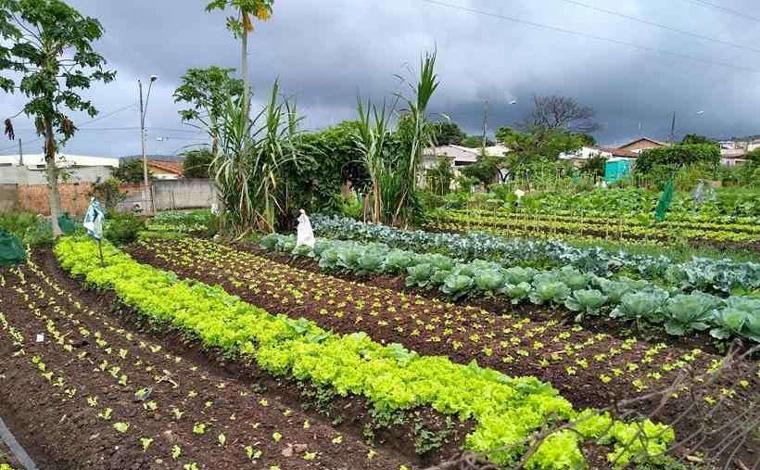 Hortas comunitárias combatem a fome em Sete Lagoas durante a pandemia