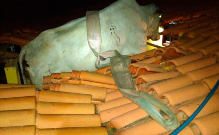 Vaca fica presa em telhado de casa após deslizamento de terra em Minas Gerais
