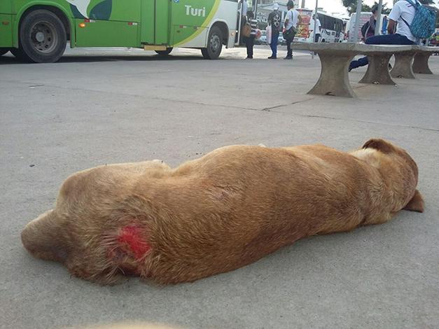 Aspa 7 pede que Prefeitura volte a recolher cães e gatos abandonados