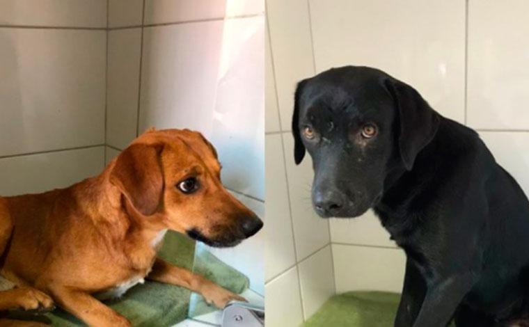 Cachorros são resgatados após terem testículos arrancados na Grande BH