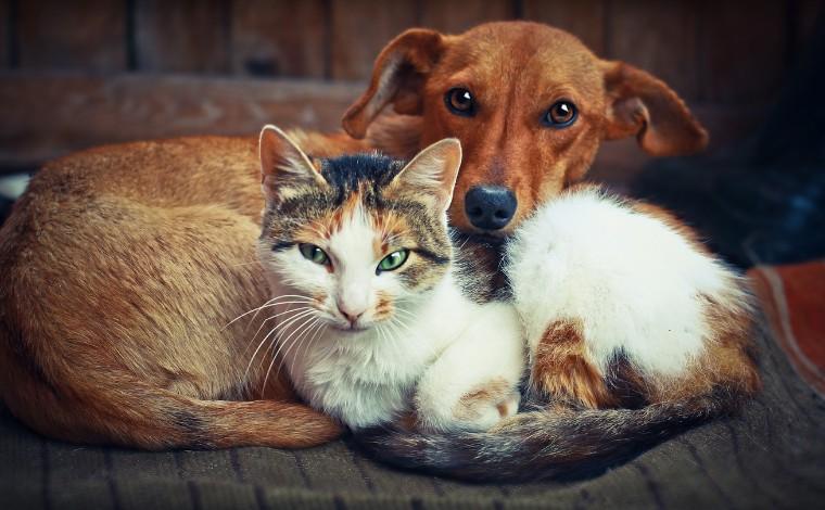 Sete Lagoas realiza castração gratuita de cães e gatos nos bairros São Francisco e Carmo II