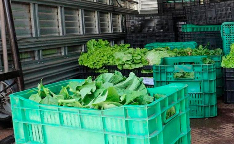 Programa Horta Social garante alimentação saudável para várias famílias em Sete Lagoas