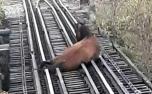 Cavalo fica com a pata presa e quase é atropelado por trem em Sete Lagoas