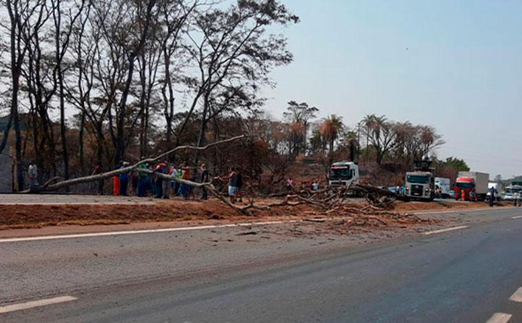 Queda de árvore interdita trecho da BR-040 em Sete Lagoas
