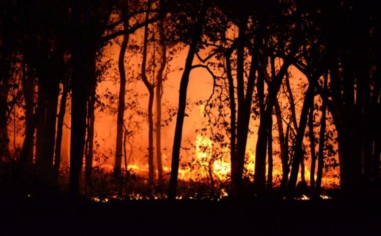 Bombeiros de Minas Gerais atendem a 1.129 chamadas por incêndios em uma semana