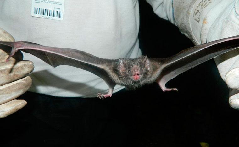 Idoso morre após ser mordido por morcego e contrair vírus da raiva