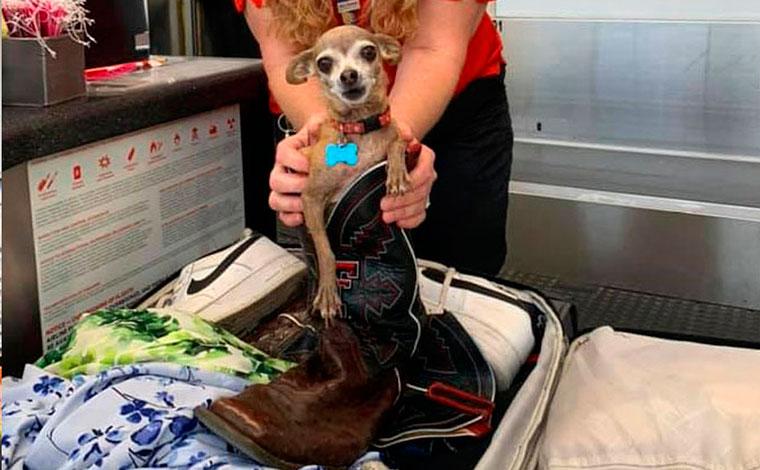 Casal descobre cachorra escondida dentro de mala após excesso de peso na bagagem