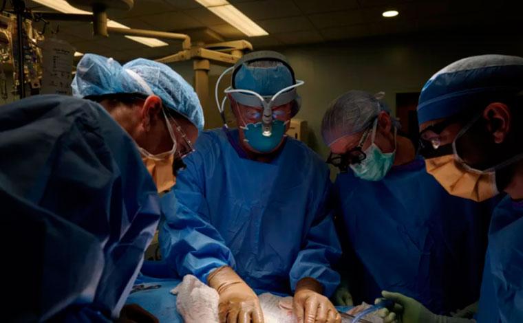 Transplante de rim de porco em humano é realizado pela primeira vez com sucesso