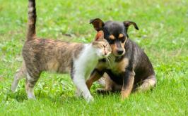 CCZ participa de evento do Dia da Família em Sete Lagoas com Feira de Adoção de cães e gatos