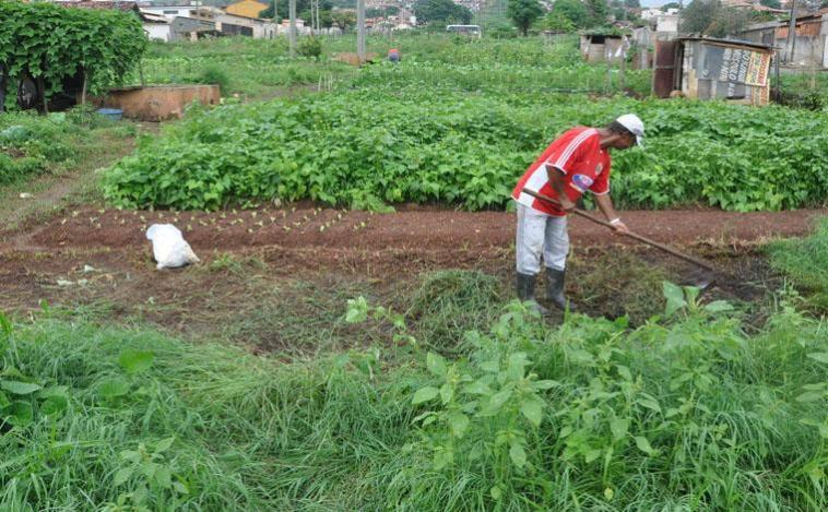 Agricultores de hortas urbanas de Sete Lagoas receberão apoio de parceiros