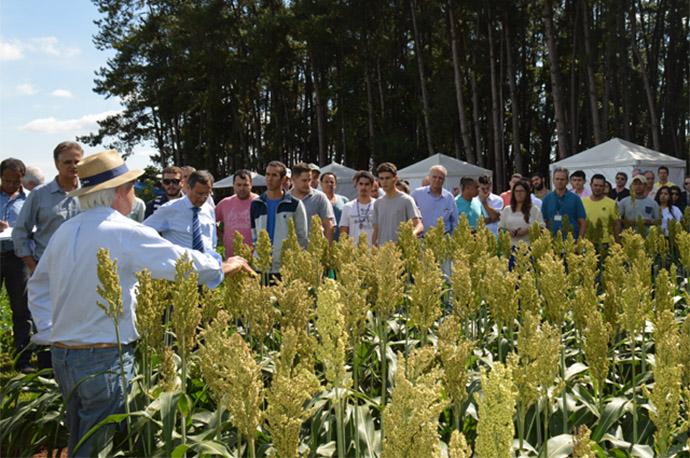 Embrapa e UNB realizam pesquisas para inserir sorgo na alimentação humana