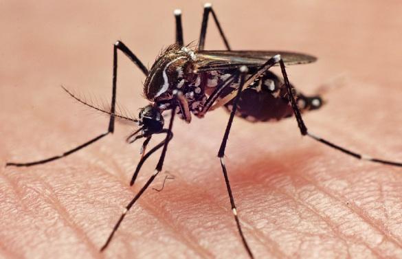 Secretaria de Estado da Saúde reconhece ocorrências de febre amarela em Minas