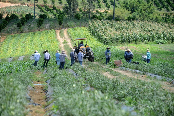 Minas Gerais lidera ranking de contratos do crédito fundiário rural no país
