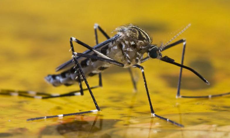Febre amarela avança em Minas Gerais e no Brasil