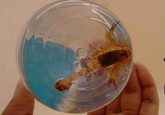Moradores relatam aparecimento de escorpiões em Sete Lagoas