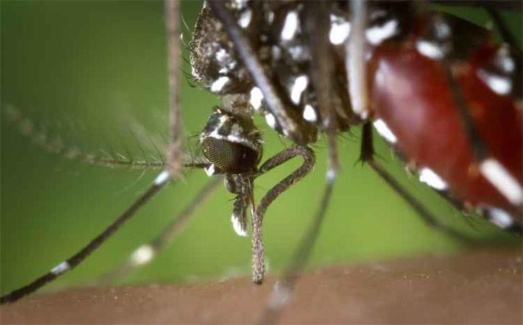 Com 64 cidades em emergência, Governo Federal reconhece surto de febre amarela