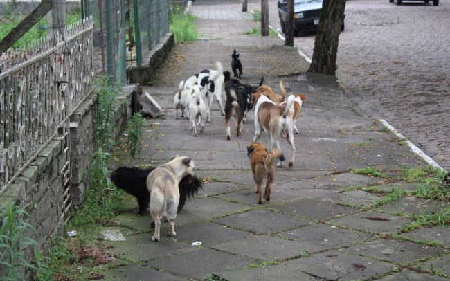 Câmara aprova projetos sobre animais abandonados em Sete Lagoas