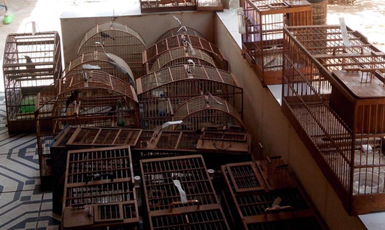 Tráfico de animais gera mais de R$ 2 milhões em multas no estado