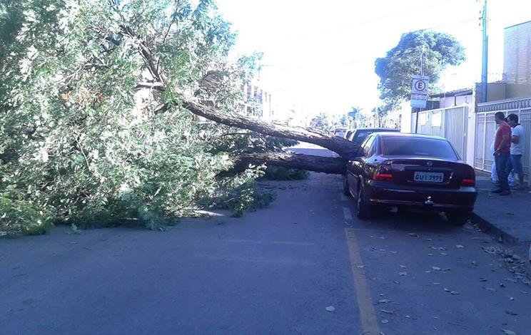 Árvore cai em via pública do Centro de Sete Lagoas e atinge dois veículos