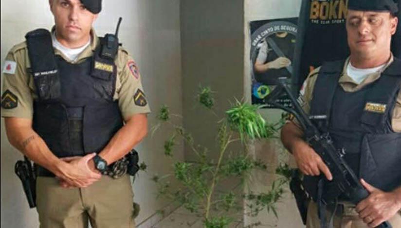 Procurando ladrão, PM apreende pé de maconha em Prudente de Morais