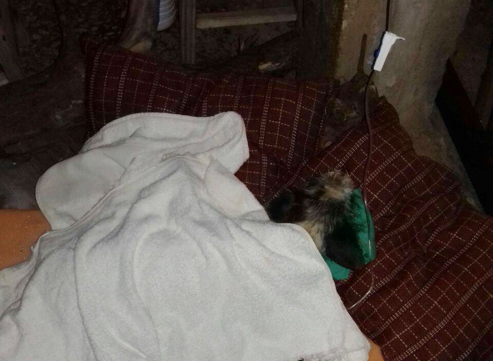 Voluntária pede ajuda para salvar cachorrinha vítima de atropelamento