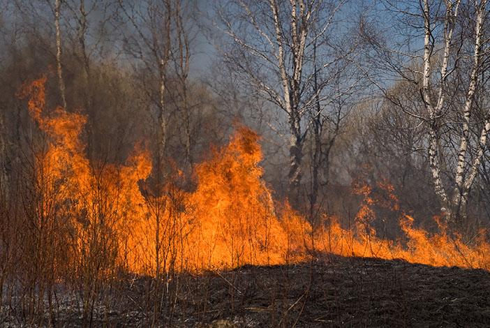 Entidades realizam blitz na BR 040 para prevenir incêndios florestais