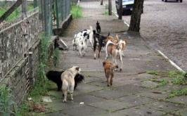 Superpopulação de animais abandonados será debatida na Câmara