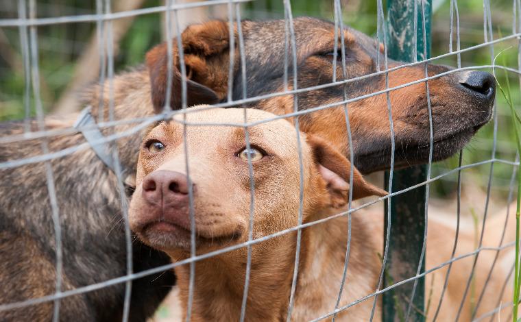 Domingo Bom pra Cachorro promove feira de adoção responsável