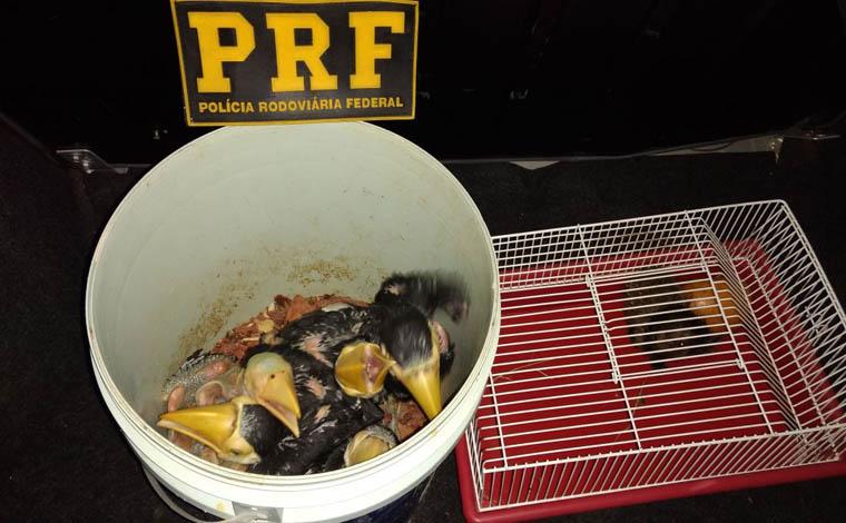 PRF prende dupla de traficantes de animais silvestres em Sete Lagoas
