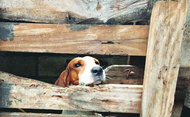 Quase 30 animais são resgatados em situação de maus tratos em Matozinhos
