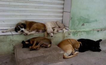 Voluntários pedem doações para construírem abrigos para animais de rua