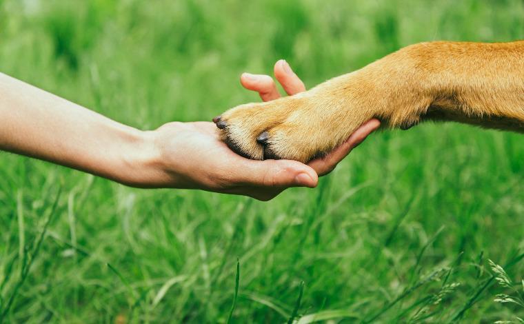 Grupo reforça pedido de ajuda para proteger animais abandonados do frio