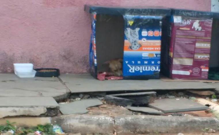 Voluntários farão novo mutirão para construir abrigos para animais de rua