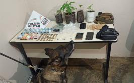 PM prende autores por tráfico de drogas e apreende quatro pés de maconha em Cordisburgo