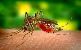 Sete Lagoas registra mais de 1.100 casos de dengue com aumento de 5,53% em 16 dias