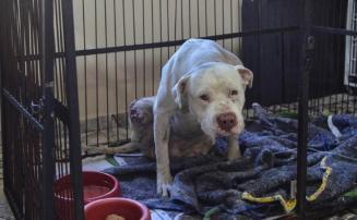 Funcionário que decepou as patas traseiras de cachorro em Confins será demitido