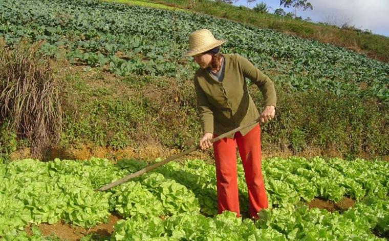 Auxílio Emergencial: Câmara aprova benefício de R$ 600 para pequenos agricultores