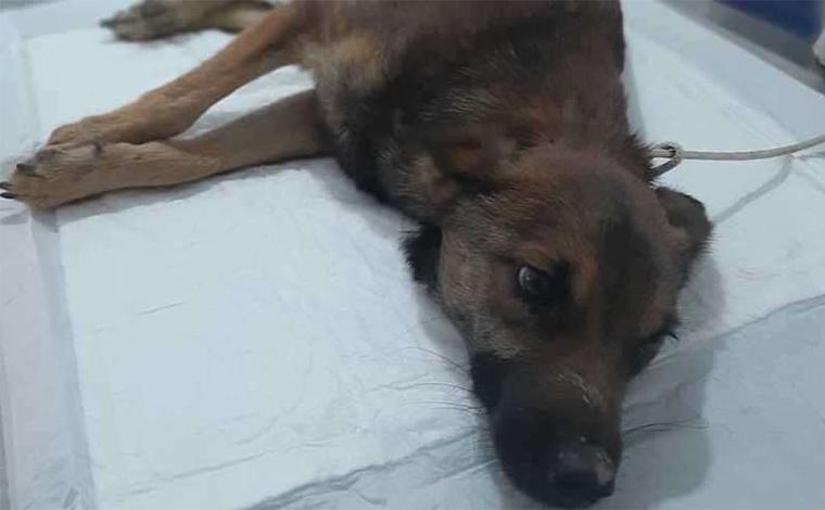 Filhote de cachorro morre após ter pênis cortado e patas quebradas em Vespasiano