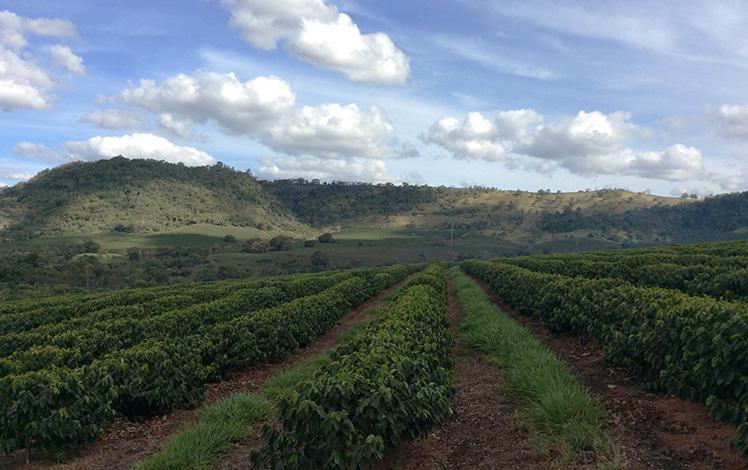 Crea-MG promove reunião com produtores agrícolas em Sete Lagoas