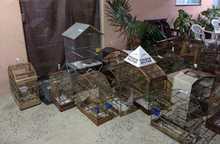Aposentado é preso por impedir fiscalização de aves silvestres
