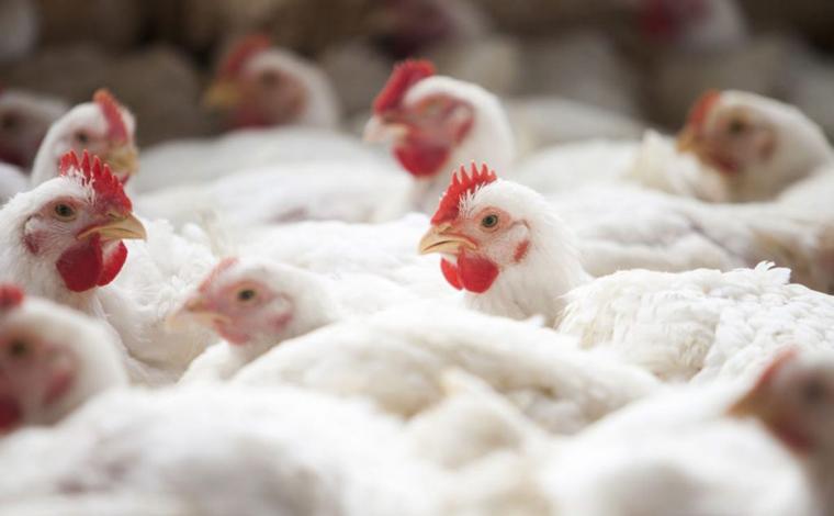 Filipinas suspendem compra de frango do Brasil por medo de coronavírus