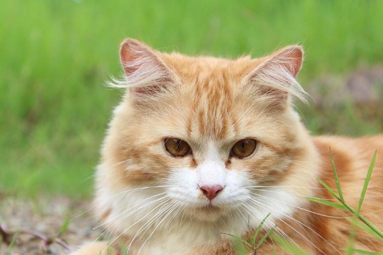 Gato de Cuiabá é o primeiro animal a testar positivo para o novo coronavírus no Brasil