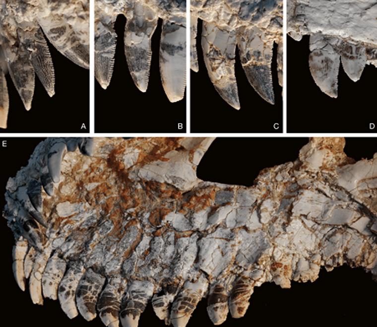 Fóssil achado no interior de Minas Gerais pode revelar novidades sobre dinossauros