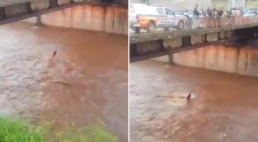 Homem se solta de corda durante resgate e é levado pela correnteza do Ribeirão Arrudas