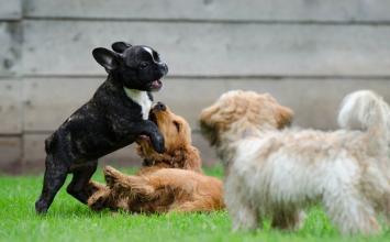 Cachorros de Curitiba são diagnosticados com Covid-19; os donos dos animais tiveram a doença